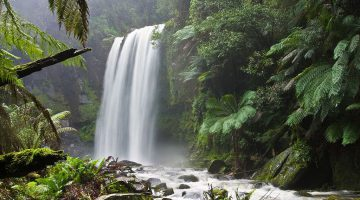 Singur în junglă: în faţa celor mai feroce prădători stranii