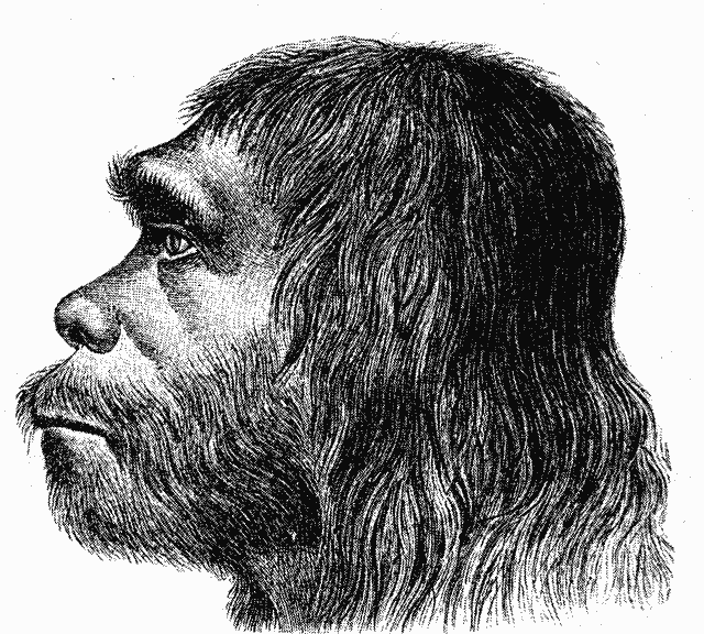Sursă «Ther Neanderthaler Fund». Publicat de Marcus Bonn. Sursă Wikipedia. Autor desen Hermann Schaaffhausen, 1888.
